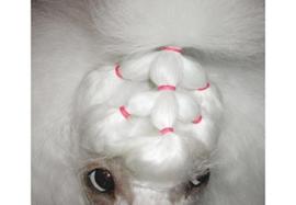 Latex Top Knot elastiekjes medium (8 mm) voor honden zwart