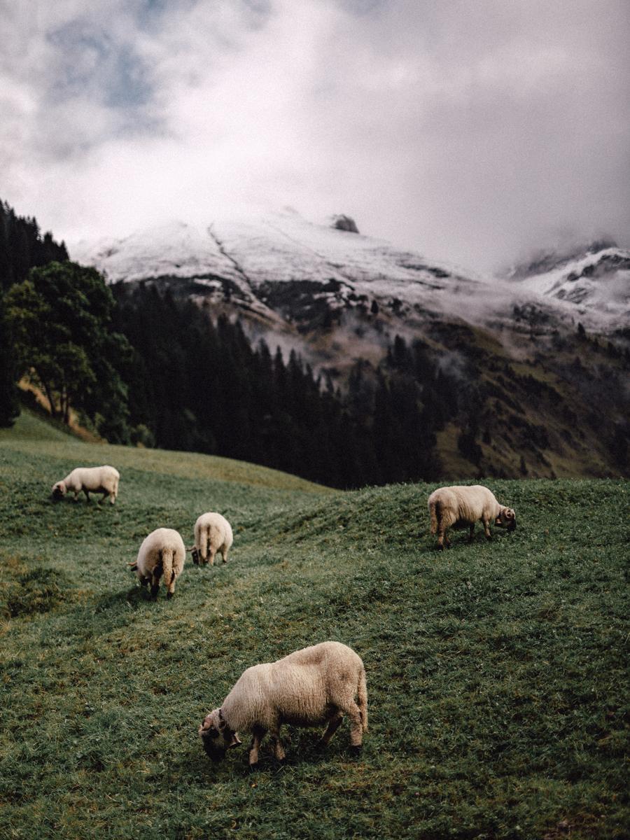 Nieuw-Zeelandse wol