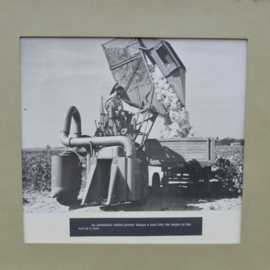 "Serie foto's ""Cotton"" jaren 60"