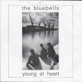 Bluebells - Young at heart