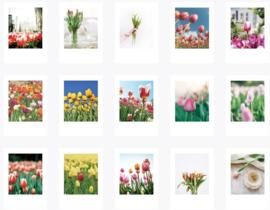 Tulpen stickerdoosje