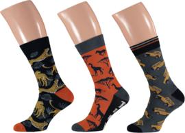 Apollo | Zoo Animal Socks Orange | 3-Pack Giftbox | Maat 41-46