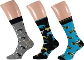 Apollo | Zoo Animal Socks | 3-Pack Giftbox | Maat 41-46
