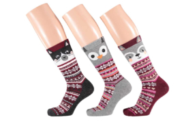 Apollo Cat P Socks | 3-Pack Giftbox | Maat 36-41