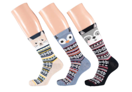 Apollo Cat B Socks | 3-Pack Giftbox | Maat 36-41