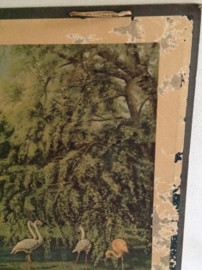 Schoolkaart. Flamingo's. Ouwehand Rhenen.