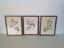 Decoratie. Set van 3 lijsten met rozen.