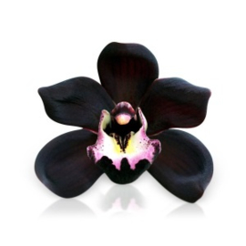 Geurolie - Black orchid