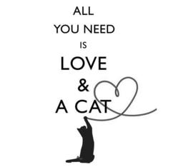 Stickers - Cat
