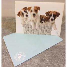 Studio Pets kaart puppy's in mandje
