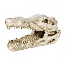 Krokodillenschedel