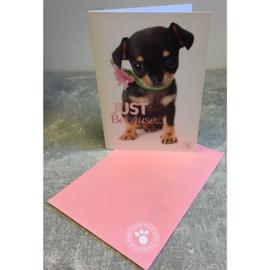 Studio Pets kaart Just Because...