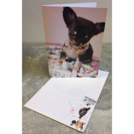 Studio Pets kaart puppy candy