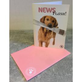 Studio Pets kaart News Flash!