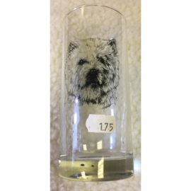 Glas Cairn terrier