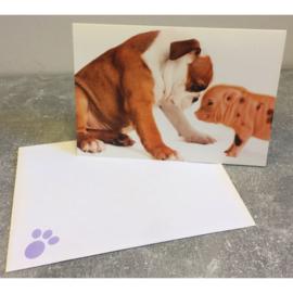 Studio Pets kaart puppy en baby varkentje