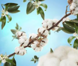 Maison Berger Geurstokjes Cotton Caress