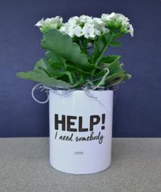 Bloempotje - Help i need somebody