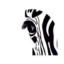 Schudbol zebra