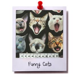 catnip cat pillow FUNNY CATS