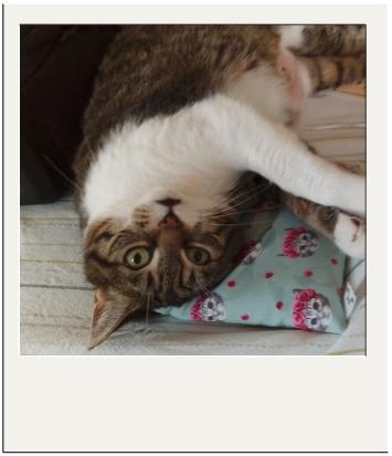 slapen op mijn catnip kattenspeelgoedje