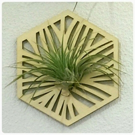 Airplant houder hexagon