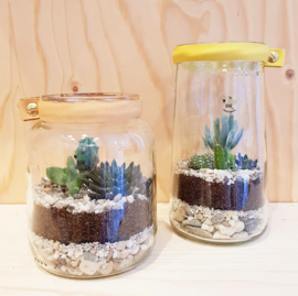 Workshop recycle terrarium maken