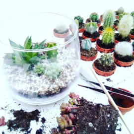 Workshop terrarium making in English