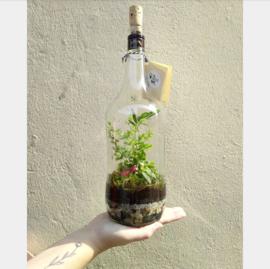 Malibu Eco-systeem voor Wendy