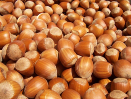Hazelnuts 1000 kilos, with peel BIO