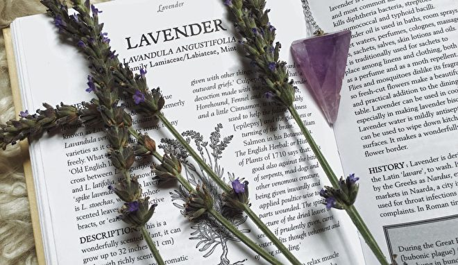 Order Isparta Famous Lavender Oil Vitex Natura Wholesale Naturally Beautiful And Healthy