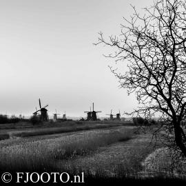 Kinderdijk 4 (Dibond)