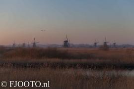 Kinderdijk 12 (Dibond)