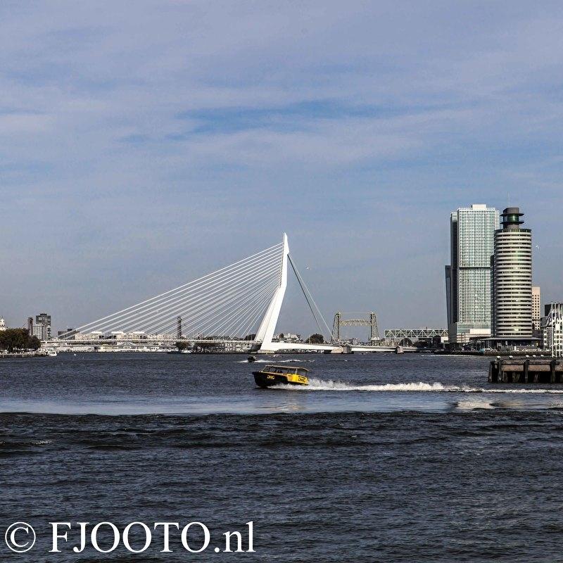 Rotterdam erasmusbrug vierkant (Poster)