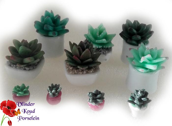 Mini workshop Vetplantjes