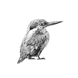 Fine Forest IJsvogel muursticker
