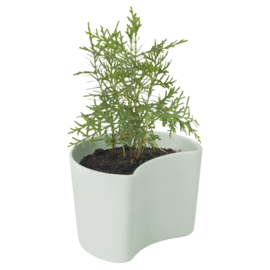 Rig-Tig Your Tree pot met zaadjes - mintgroen