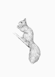 Inkylines Eekhoorn A6 print