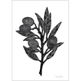 Monika Petersen Mini Art Print Olive Branch - A5