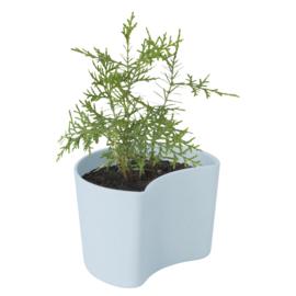 Rig-Tig Your Tree pot met zaadjes - blauw
