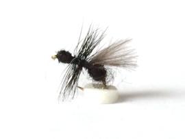 CDC Ant
