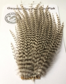 Feathers & Hackles