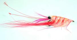 Crangon Shrimp