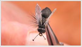 Flying Ant Black