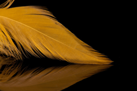 Schlappen Feathers (colors)