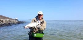 Seabass Craft Fur Shrimp