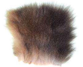 Australian Oppossum