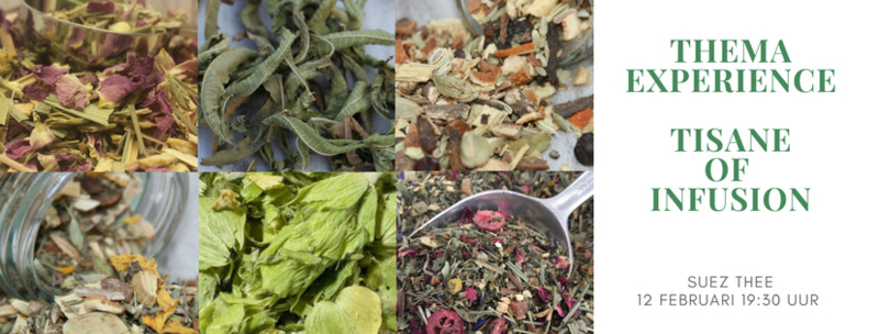 Thema Experience Tisane of Infusion