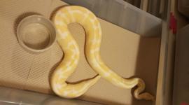 Honingraat bodempapier voor reptielenbakken