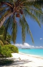 fotobehang art. 70024 Tropisch strand